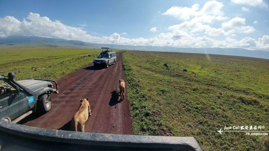 [坦尚尼亞] 4天3夜動物遷徙Safari寒假自由行(下)55